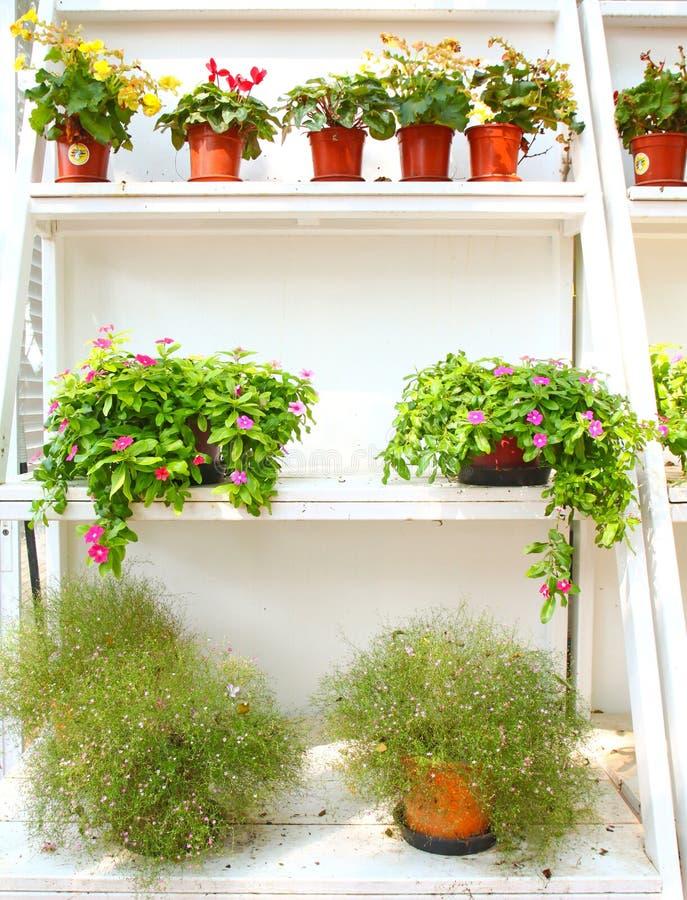 Plantas y flores en estante foto de archivo imagen de for Estantes para plantas exteriores