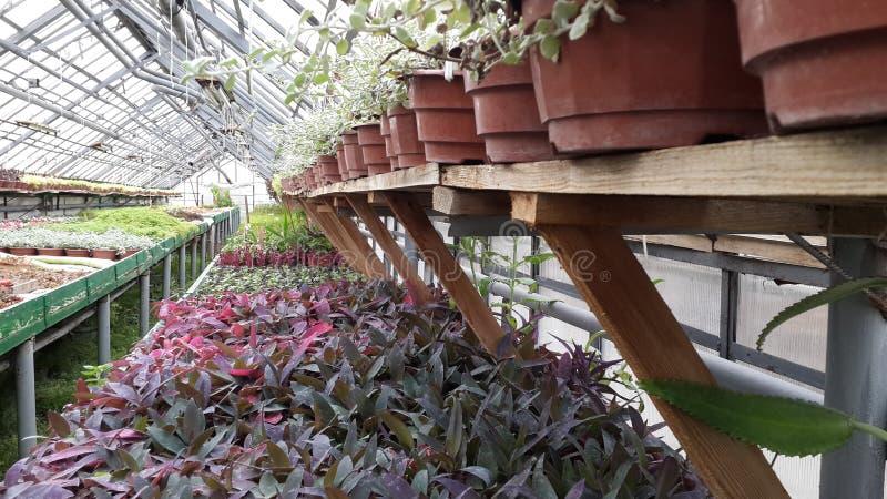 Plantas y flores en superficie de madera en un invernadero fotos de archivo libres de regalías