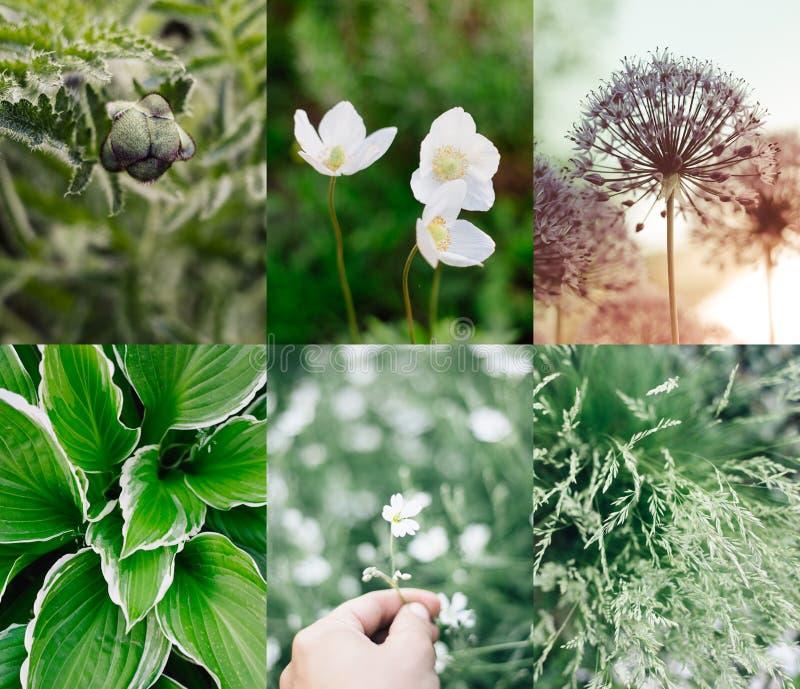 Plantas y flores verdes del collage del verano imagen de archivo libre de regalías