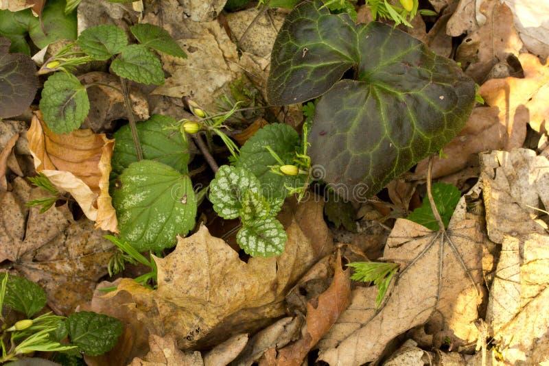 Plantas y hojas foto de archivo