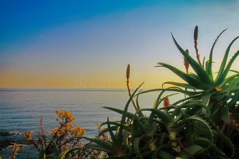 Plantas y hojas florecientes rojas del agavo en costa mediterránea imagen de archivo