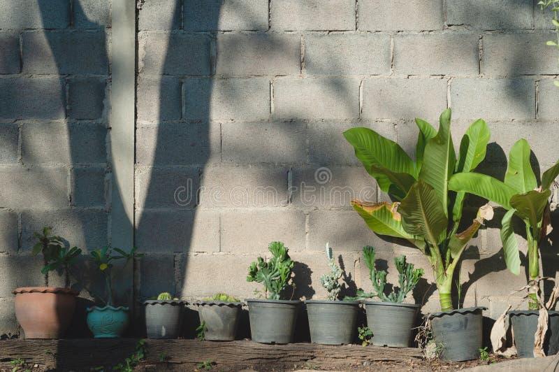 Plantas y pared de ladrillo imagenes de archivo