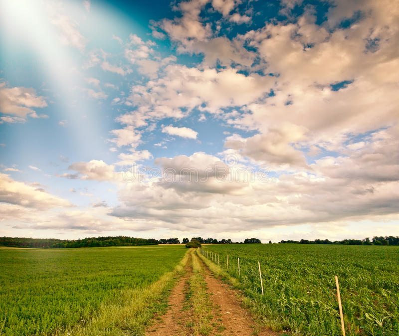 Download Plantation stock image. Image of path, meadow, clouds - 20063243