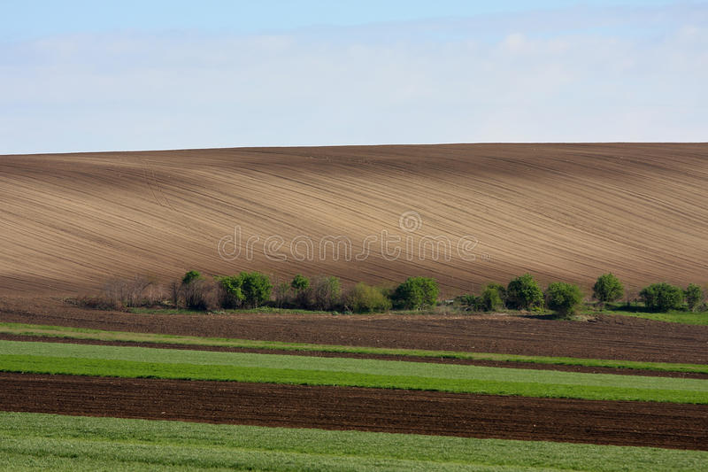Download Plantation stock image. Image of farmland, growth, cultivation - 24354895