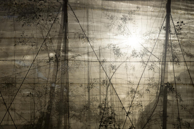 Plantation with backlight behind the net. El Hierro, El Golfo valley stock images