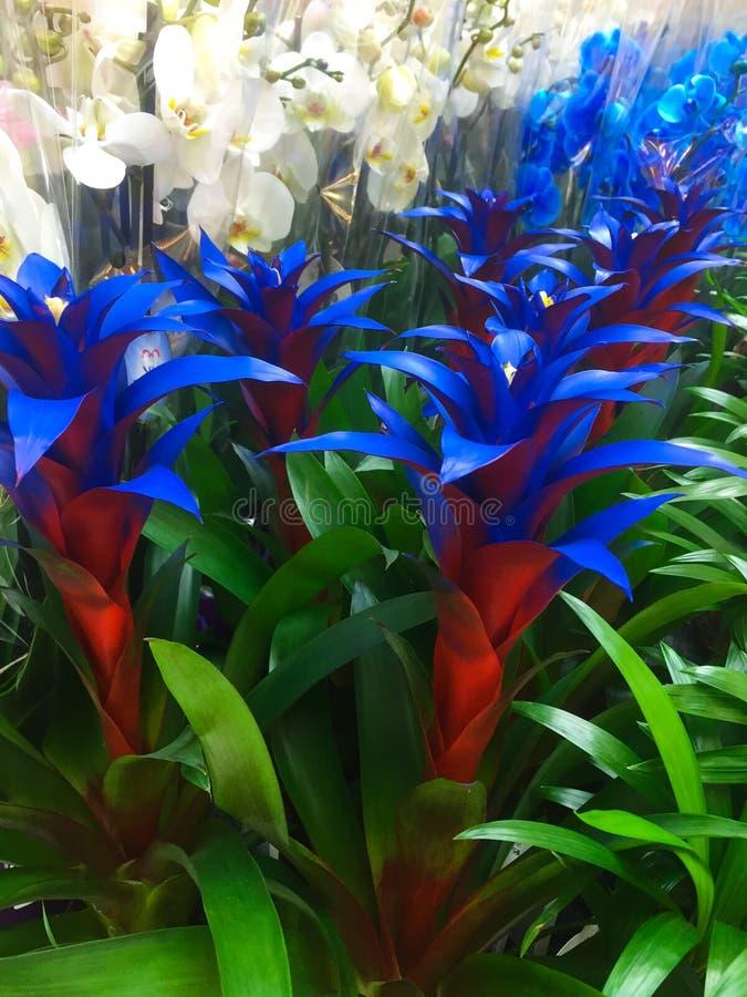 Plantation blanche et bleue de fleur photos stock