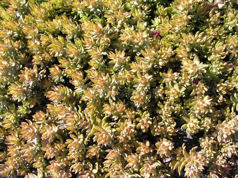 Plantation Of Cactus Royalty Free Stock Photos