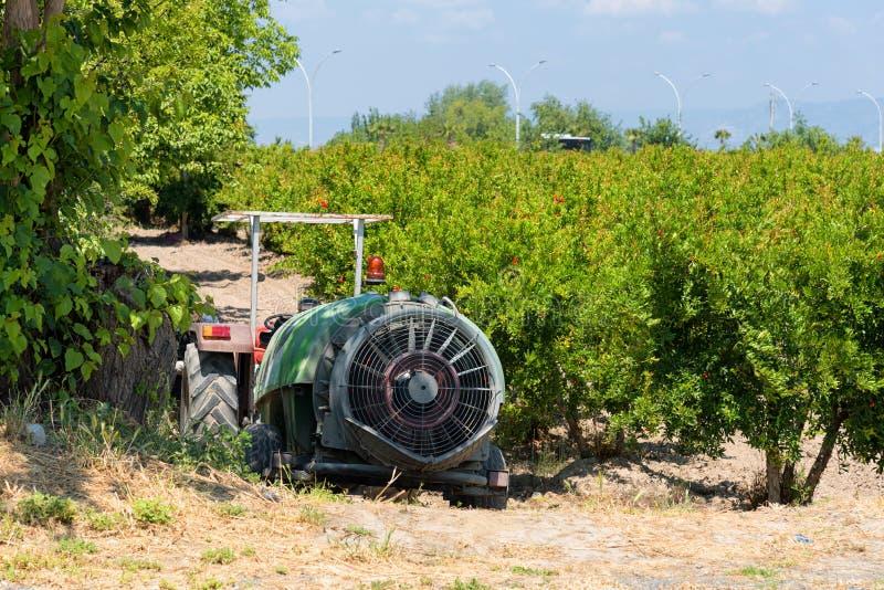 Plantation d'arbre de grenade en Turquie, horticulture photos libres de droits
