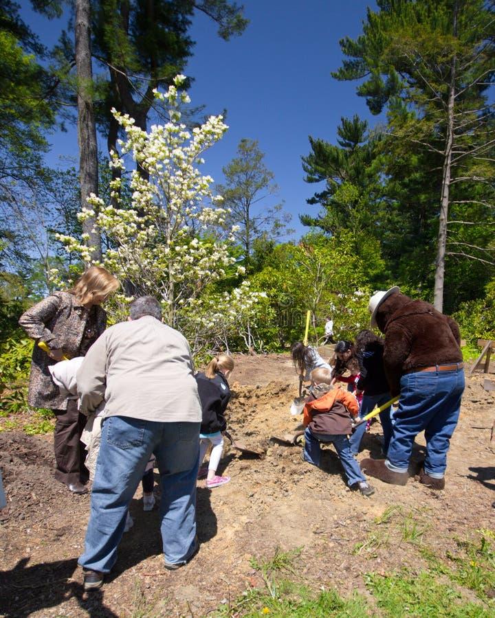 Plantation d'arbres image libre de droits