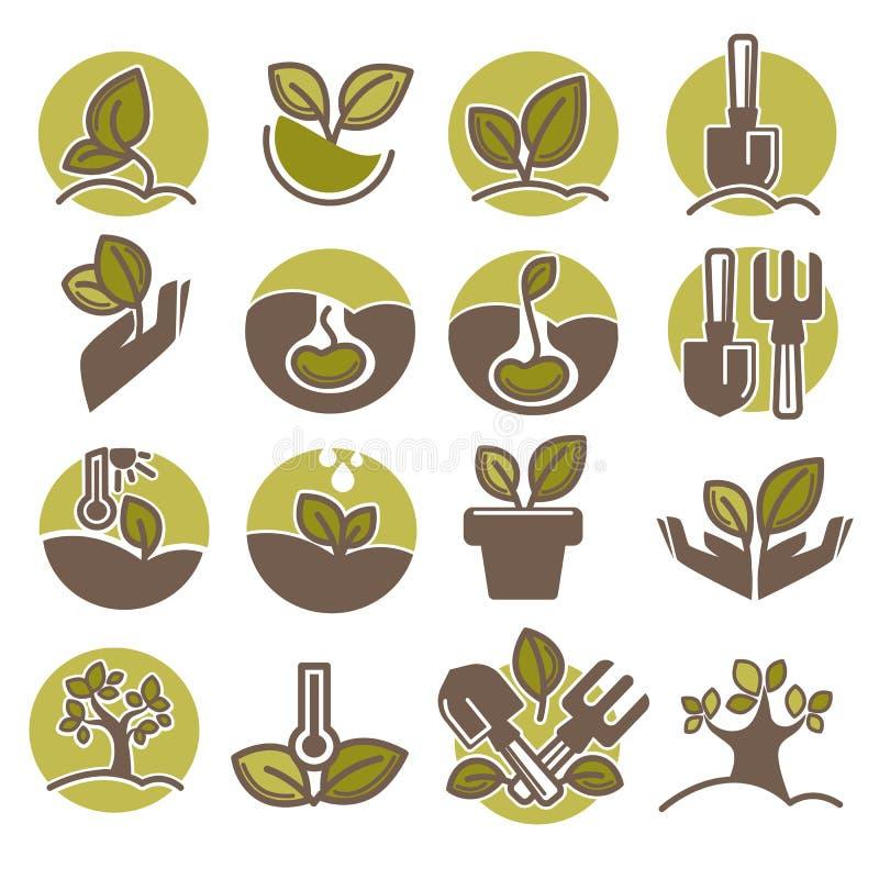 Plantation d'arbres et élevage des icônes infographic de processus de vecteur illustration libre de droits