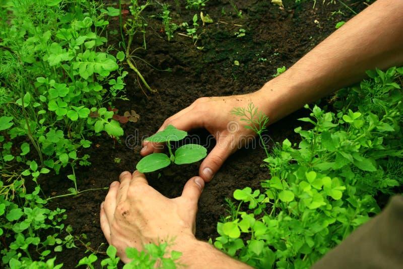 Download Plantation D'un Arbre Photos stock - Image: 9778193