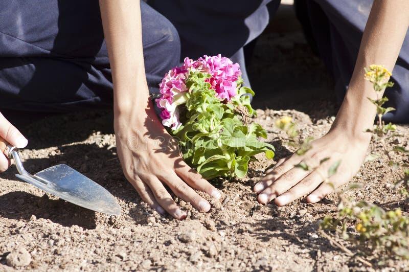Plantation d'un jardin de fleur image stock