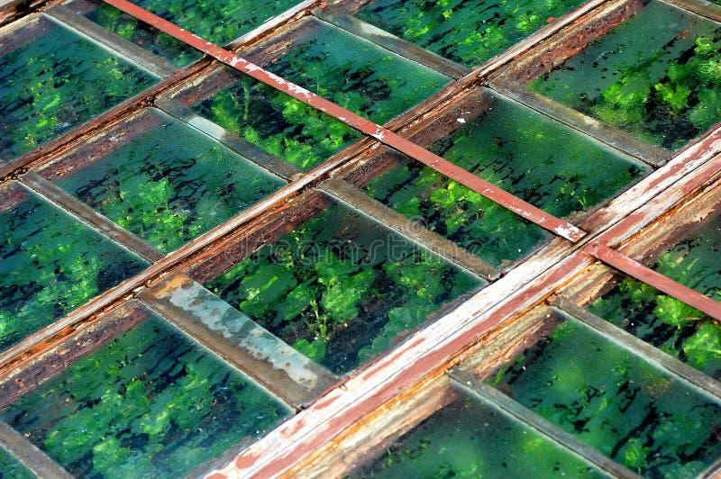 Plantation de bac photo libre de droits