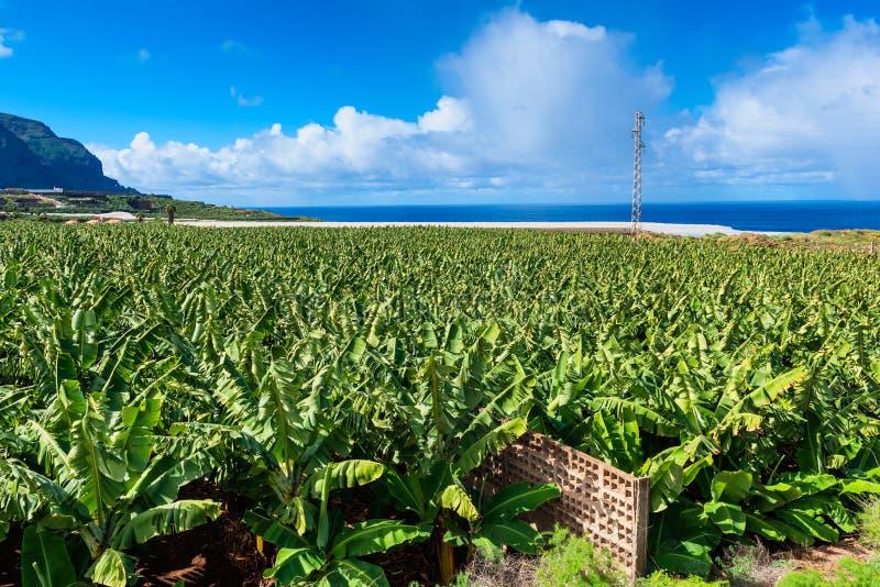 Plantation de banane sur Ténérife images stock