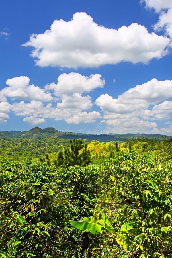 Plantation de Croydon, Jamaïque images libres de droits