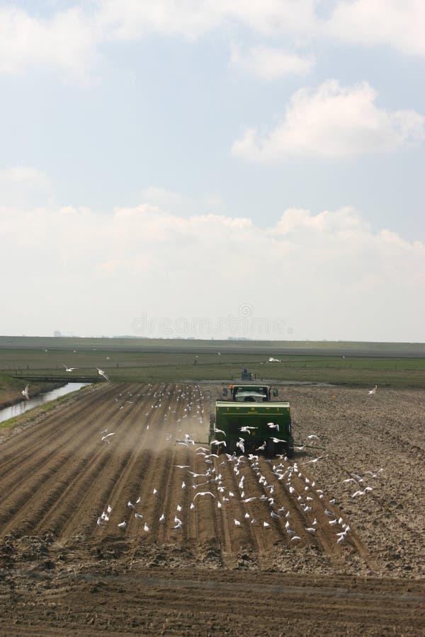 Download Plantation de fermier image stock. Image du nuage, centrale - 734451