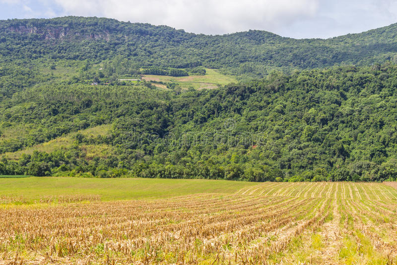Plantation de forêt et de maïs photo stock