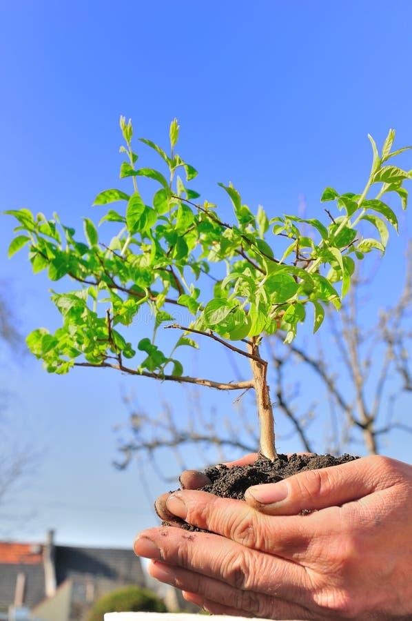 Plantation de l'arbre images stock
