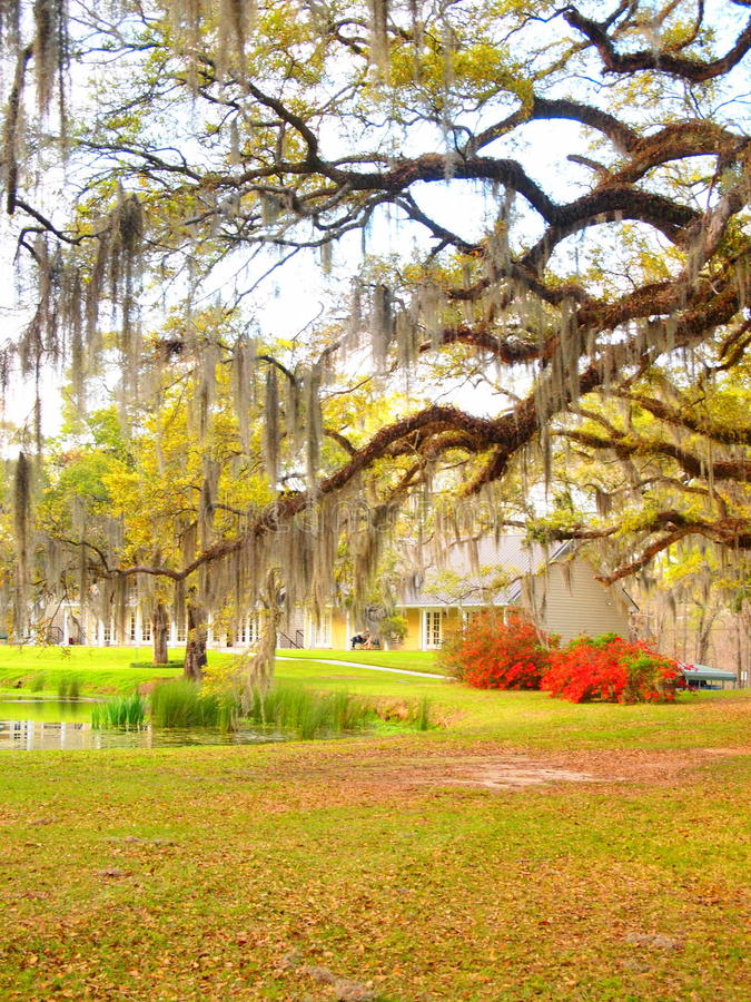 Plantation de la Louisiane photographie stock libre de droits