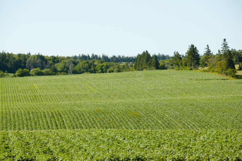Plantation de pomme de terre - prince Edward Island - Canada image stock