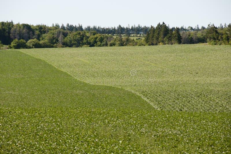 Plantation de pomme de terre - prince Edward Island - Canada images libres de droits