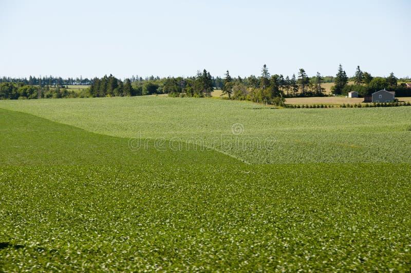 Plantation de pomme de terre - prince Edward Island - Canada photo stock