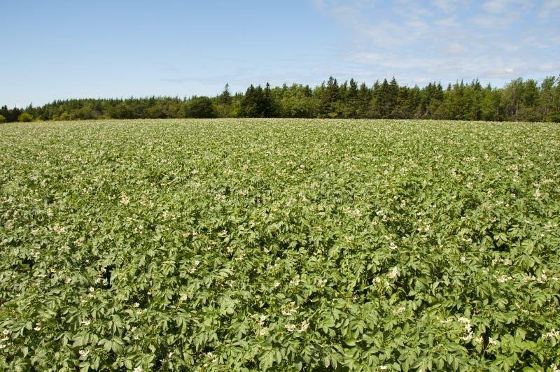 Plantation de pomme de terre - prince Edward Island - Canada photographie stock libre de droits