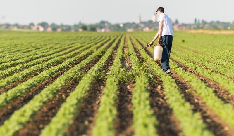 Plantation de pulvérisation de soja de jeune exploitant agricole avec le pesticide photographie stock libre de droits