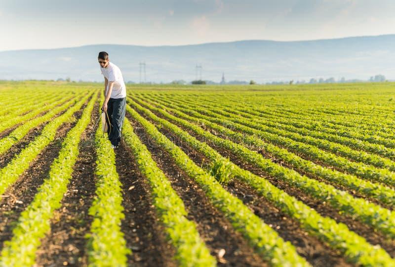 Plantation de pulvérisation de soja de jeune exploitant agricole avec le pesticide image stock