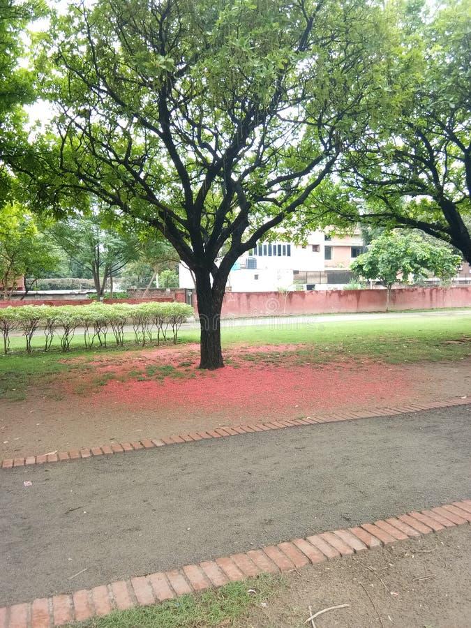 Plantation de ressort d'arbre image stock