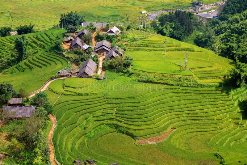 Plantation de riz photographie stock libre de droits