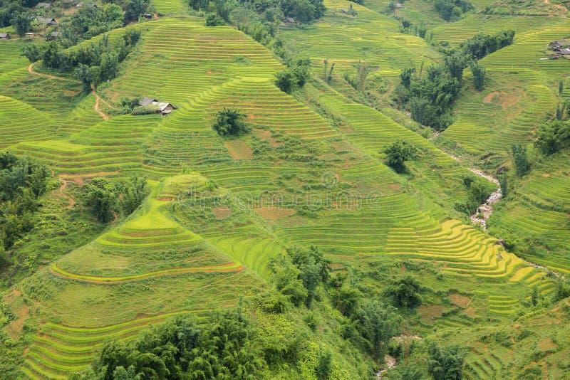 Plantation de riz image libre de droits