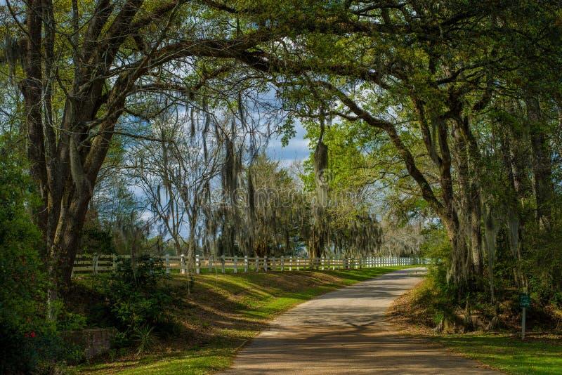 Plantation de rosedown d'entrée, Louisiane photo libre de droits
