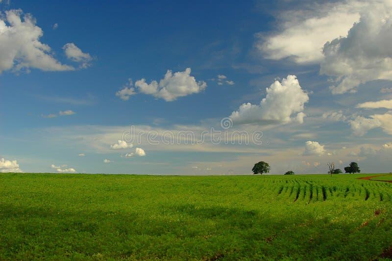 Plantation de soja photos libres de droits