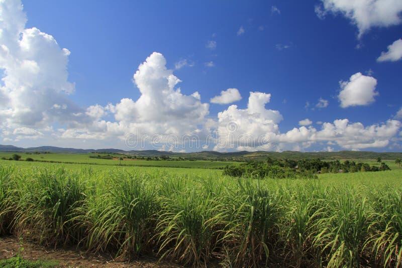 Plantation de sucre au Cuba photos stock