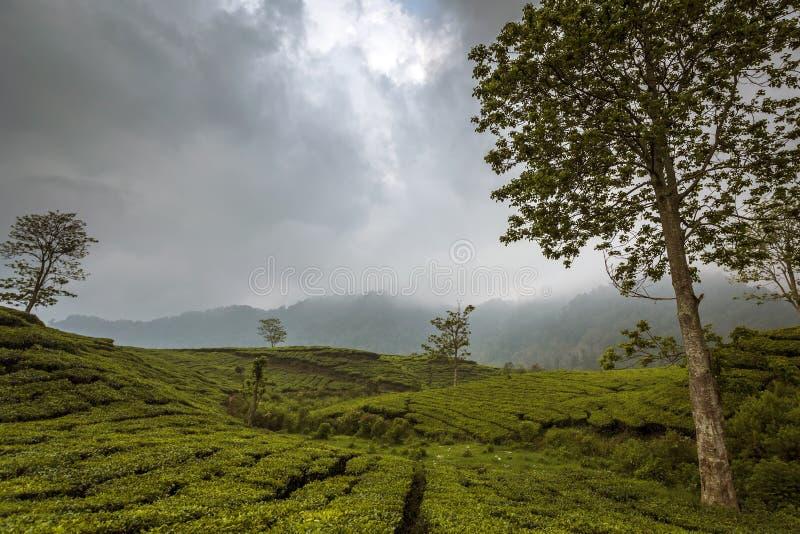 Plantation de thé à Bandung, Indonésie un après-midi nuageux photographie stock