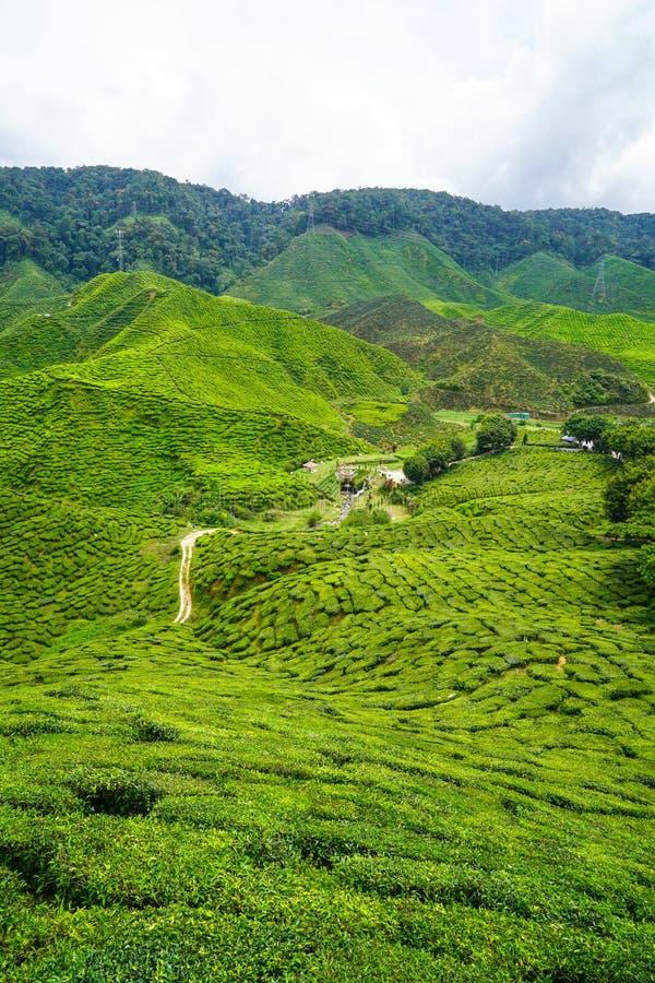 Download Plantation de thé image stock. Image du champs, ciel - 76083465