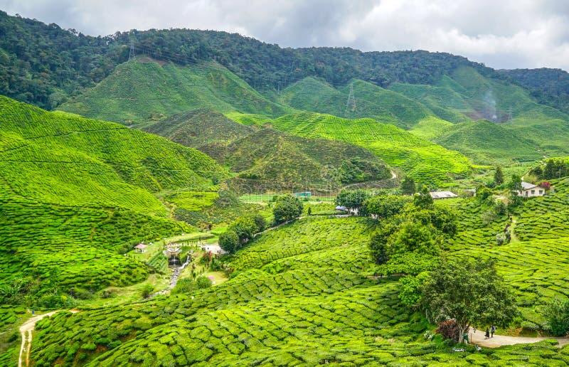 Download Plantation de thé photo stock. Image du beau, zone, thé - 76083468