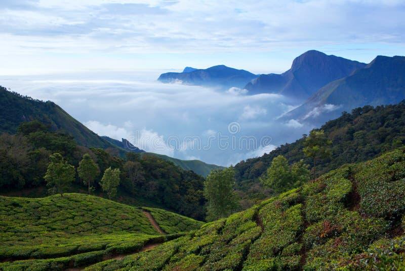 Plantation de thé au Kerala, Inde du sud photos libres de droits