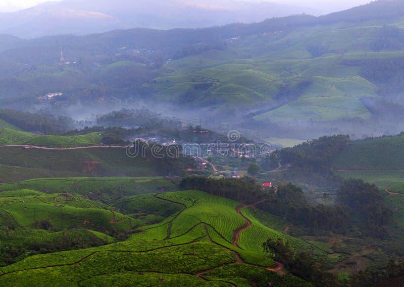 Plantation de thé au Kerala, Inde du sud photo libre de droits