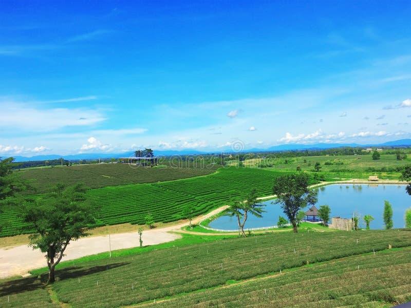 Plantation de thé, Chaingrai, Thaïlande, Asie images stock