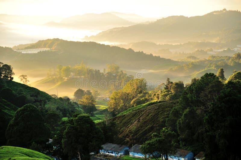 Plantation de thé de Sungai Palas images libres de droits