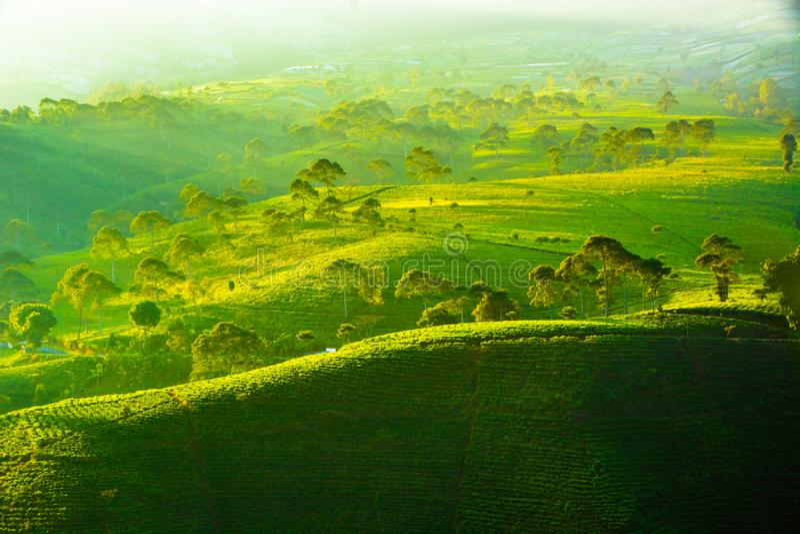 Plantation de th? de Kemuning Karanganyar Tawangmangu, solo, Indon?sie images libres de droits