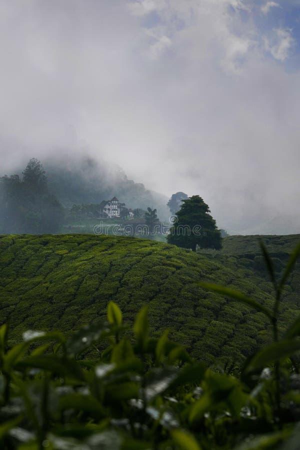 Plantation de thé vert avec la maison cachée en nuages, Malaisie photos libres de droits