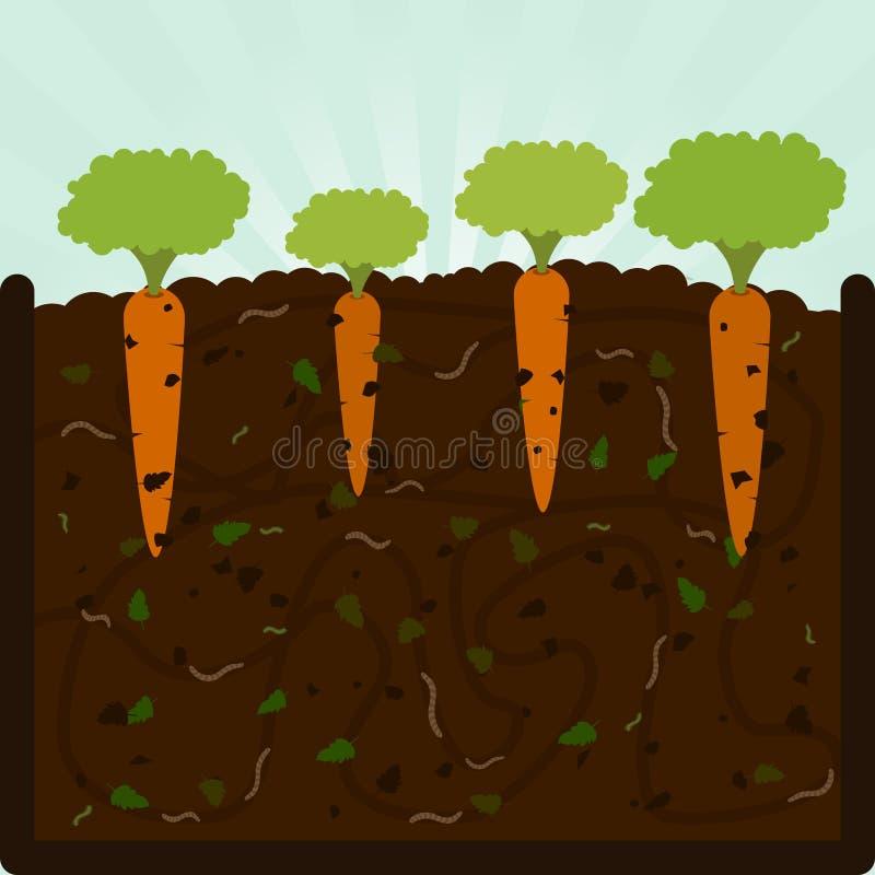 Plantation des carottes et du compost
