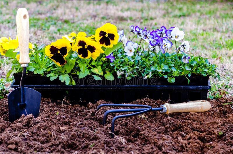 Plantation des fleurs image libre de droits