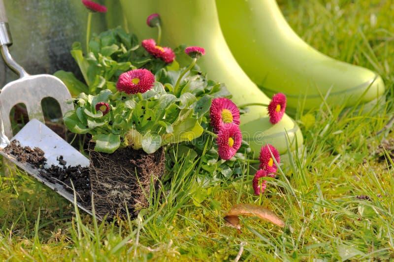 Plantation des fleurs photos stock