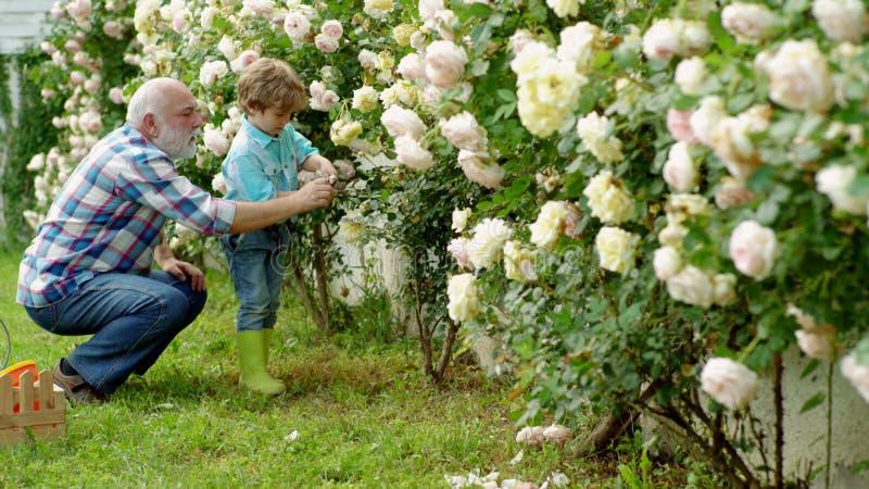 Plantation des fleurs Jardinier dans le jardin Grand-père heureux avec son petit-fils travaillant dans le jardin G?n?ration de fa photos libres de droits