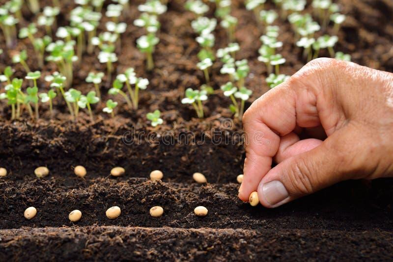 Plantation des graines photo stock