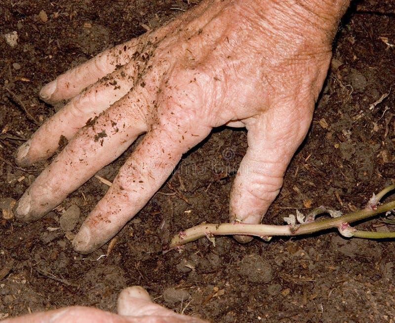 Plantation des pommes de terre 2 photos libres de droits